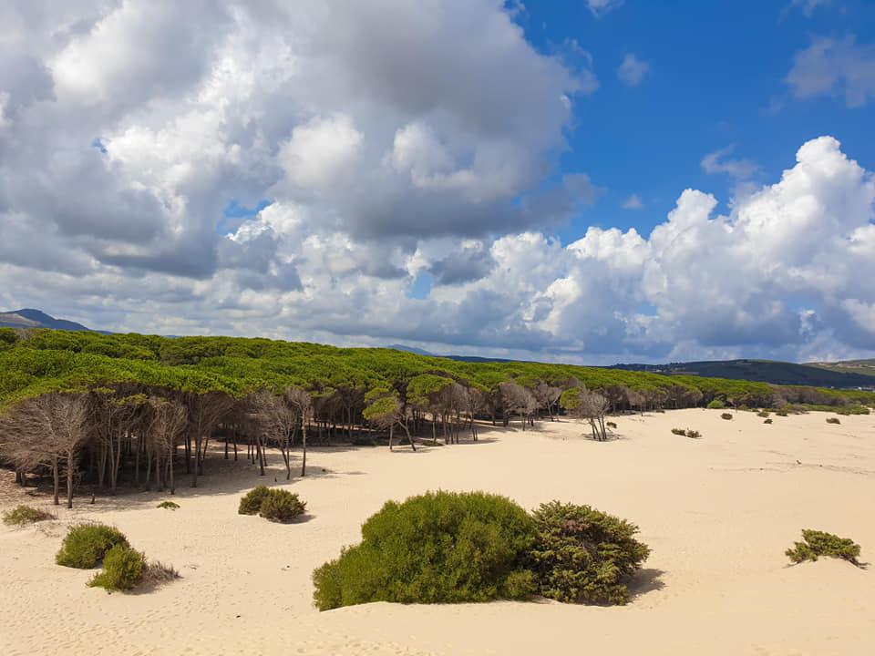 Cape-Serrat