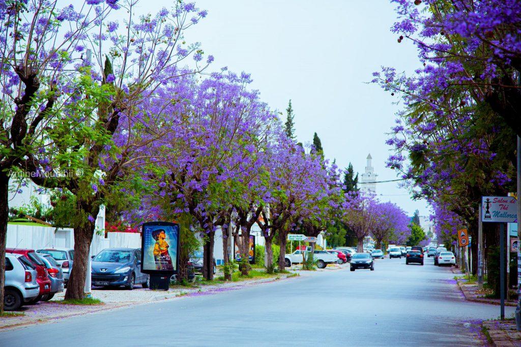 Tunis, Tunisia, 2020.